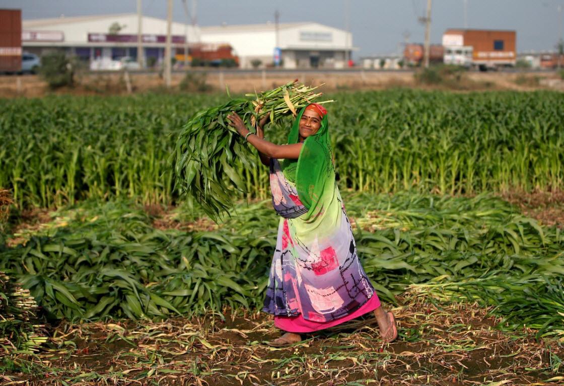 Интересные фотографии из Индии культура