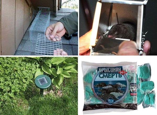 Как бороться с землеройкой на огороде, чтобы спасти урожай сделай сам