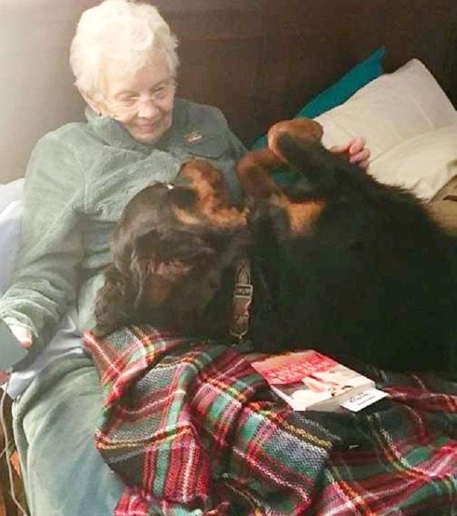 «Люблю только маленьких собак!» — заявила старушка, но знакомство с новым питомцем все изменило истории из жизни